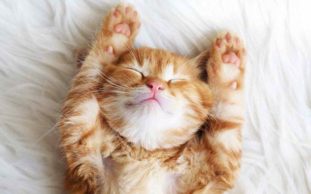 Cat Health – Keeping Them Purr-fect